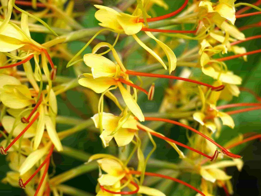 longose-Fauna-flora-açores-azores-faune-flore-perfect-wild-green-beauty-luxo